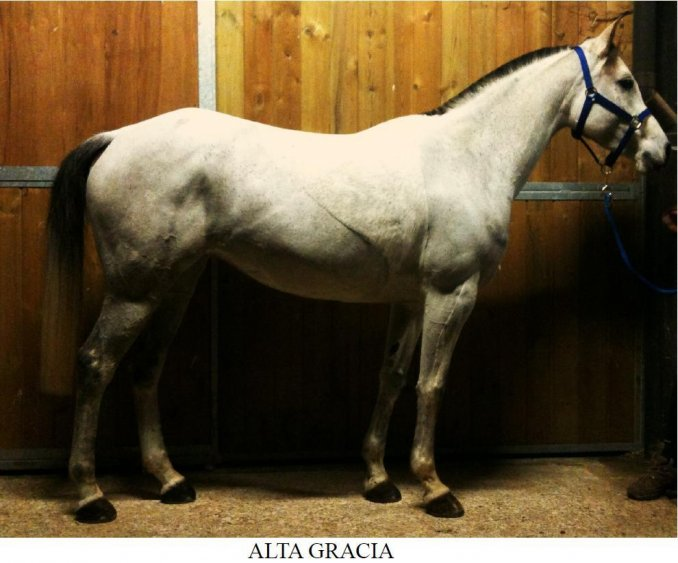 Pedigree Alta Gracia - Arabian Horses